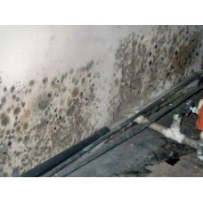 Как избавится от грибка в подвале - советы по уничтожению
