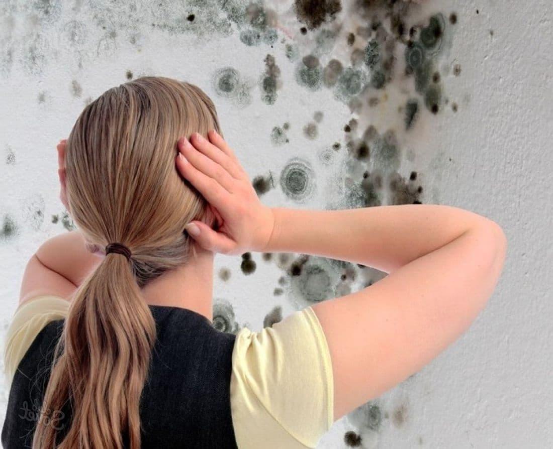 купить средство от грибка на стенах